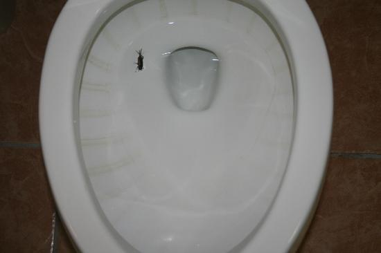 Holiday Inn Express & Suites Elgin : Hard water stains...bug in the toilet