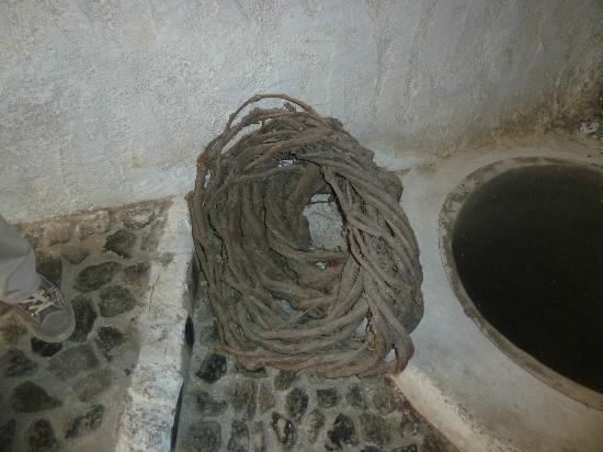 Santorini Wine Adventure: A vine 'basket'