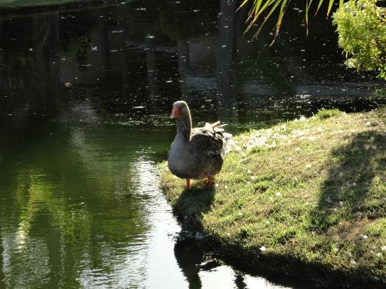 Natura Park Beach - EcoResort & Spa: Ducks!