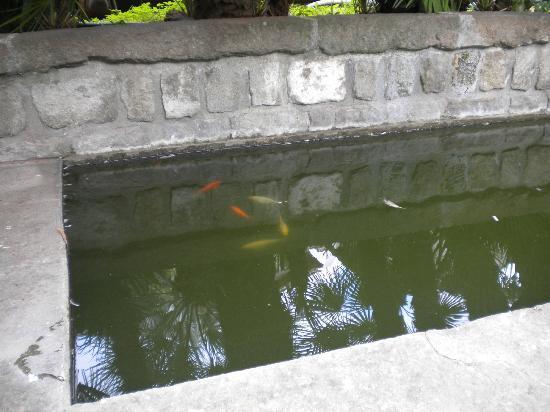 Vasca Da Esterno Pesci : Vasca pesci nelo giardino foto di relais paradosso viterbo