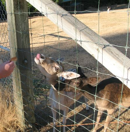 A Hidden Haven Bed and Breakfast: Feeding the deer