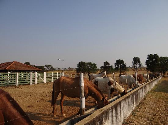 Hotel Fazenda Cabugi : Curral