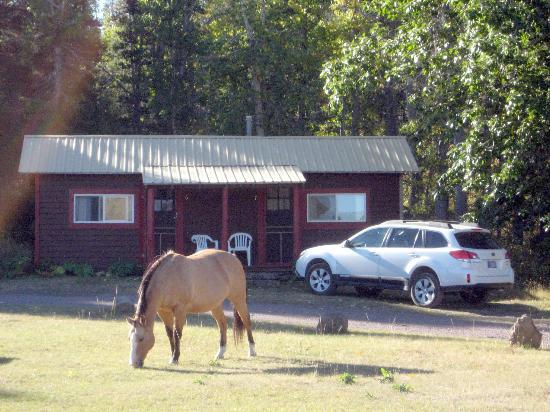 Bison Creek Ranch: Cabin 6&7 with friendly horse.