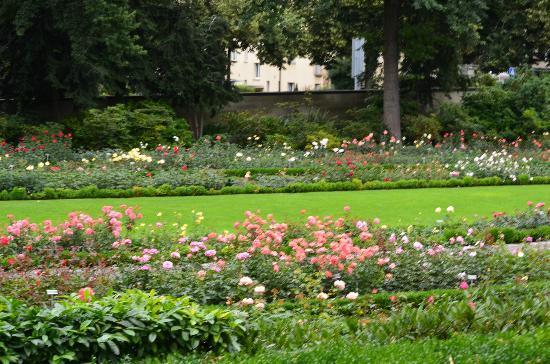 Rose Garden (Rosengarten): Flores y pasto