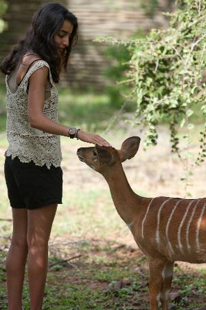 andBeyond Phinda Mountain Lodge: Mountain Lodge houseguest with a young Nyala 
