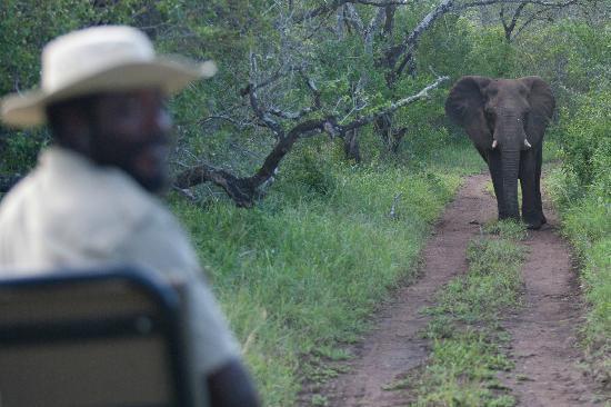 andBeyond Phinda Mountain Lodge: Pat (tracker) and Elephant on our safari 