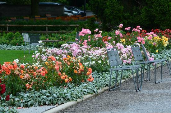 Rose Garden (Rosengarten): Mas Flores