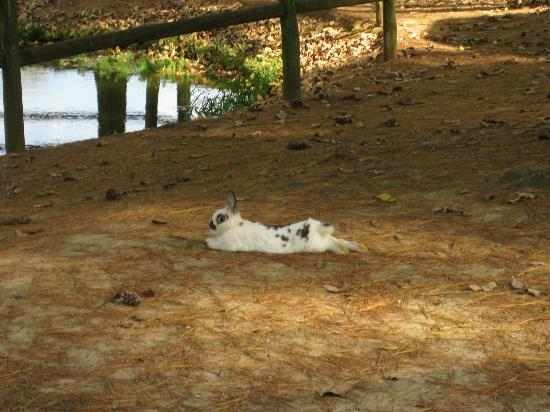 Shenandoah Valley Campground: One of the bunnies roaming