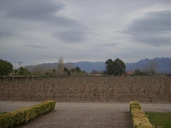La Bourgogne: Vistalba Vineyard.
