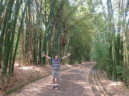 Hotel Termas De Jurema: bajo la catedral de bambu