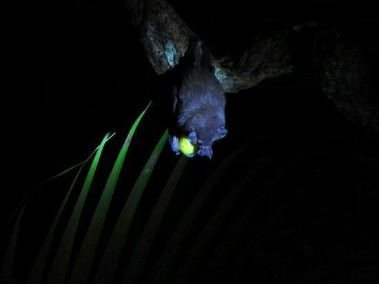 The Bat Jungle: cena a media luz