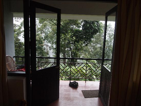 The Tall Trees Munnar: view out the front door