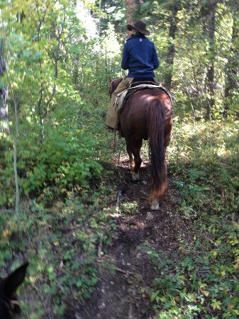 Wilderness Trails Ranch: Riding through a forest