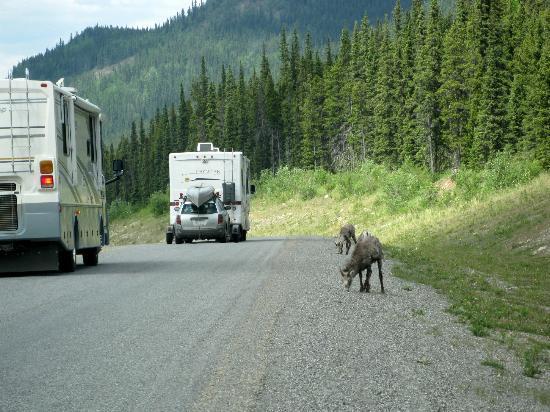 Alaska Highway照片