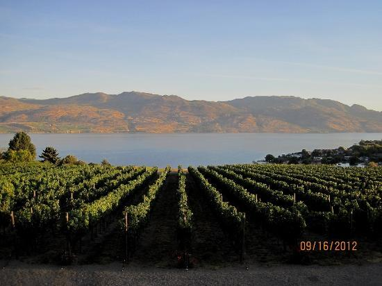 A View of the Lake: View of a vineyard