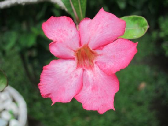 Melasti Legian Beach Resort & Spa: Another flower