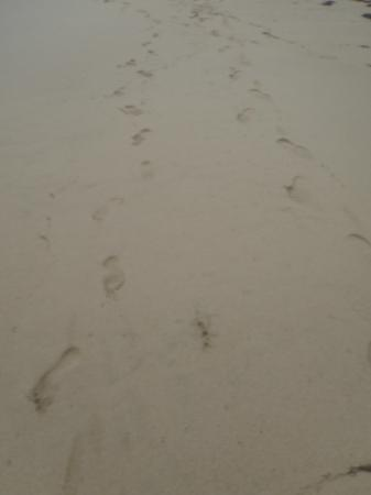 Ocean Park Beach: Footsteps in the sand