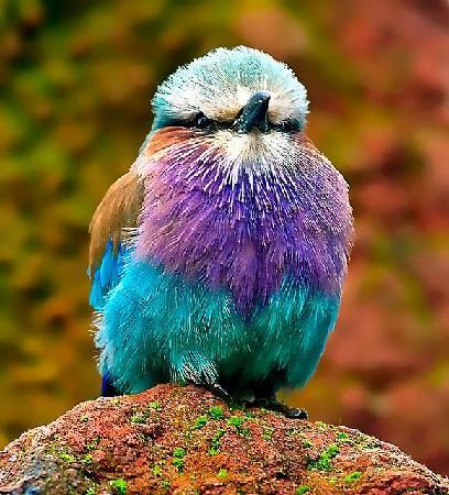 birdsnchirps Homestay: Birders Paradise .