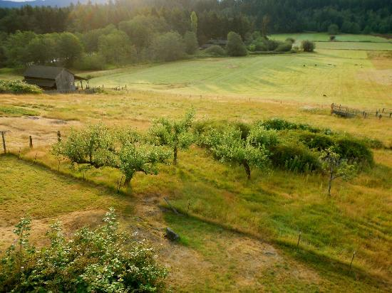 Turtleback Farm Inn : View from an Orchard House room's porch