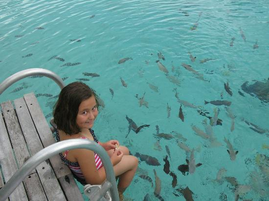 The St. Regis Bora Bora Resort: Feeding fish at Lagunarium