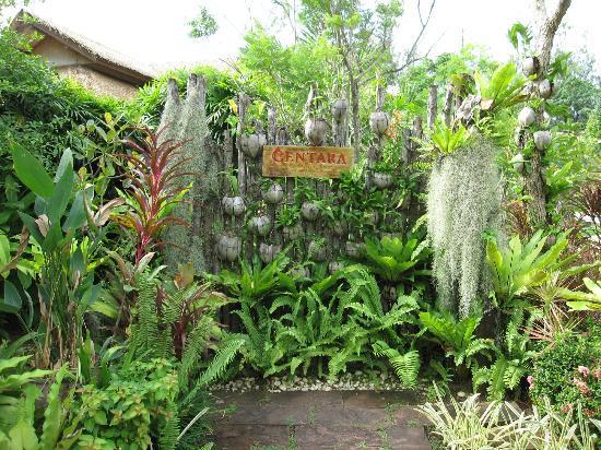 Centara Karon Resort Phuket: gardens