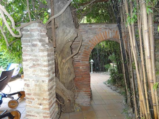 Casa Pairal: glycine