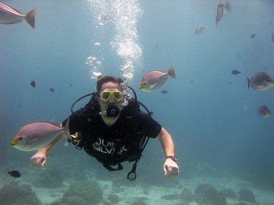 Phuket Dive Tours: Diving with Phuket Scuba Diving Tours