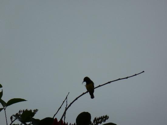 Full Moon Village: der Kolibri wurde leider weggeschnitten