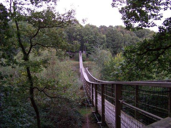 Les Cabanes du Bois Landry : la grande passerelle