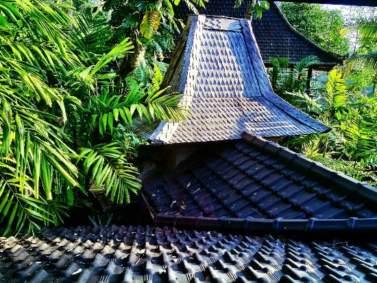 Bidadari Private Villas & Retreat: the view from our room