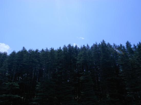 Hotel Hadimba Way : beautiful pine trees