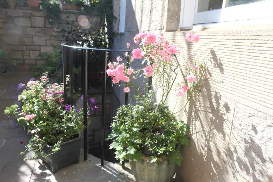 Penny Airey- No.38 Bed & Breakfast: Lovely flowers at No. 38
