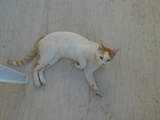 Hotel Pelagia Bay : Le chat!