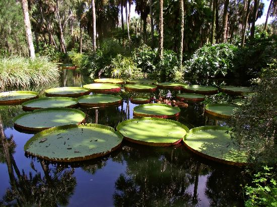 Giant lily pads - Picture of Bok Tower Gardens, Lake Wales - TripAdvisor