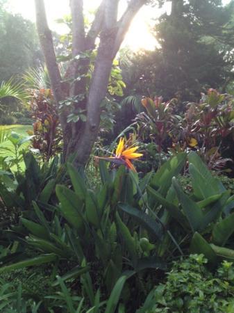 La Isla Tepoztlan: Ave del Paraiso