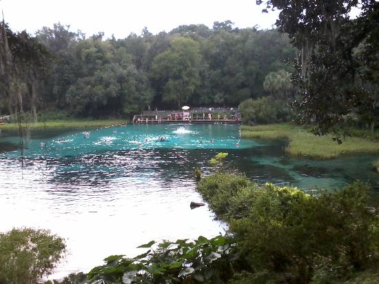 Dunnellon, ฟลอริด้า: ranbow springs s.p.swiming area[one at the campgrounds too!]