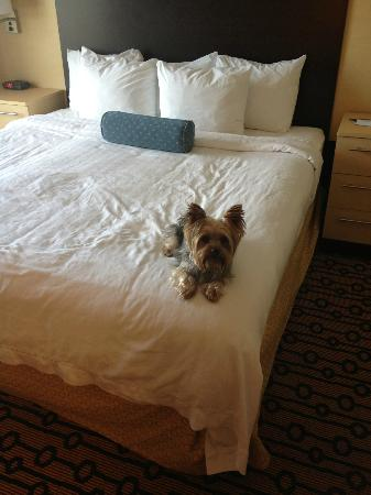 TownePlace Suites Providence North Kingstown: Dog on King Size Bed