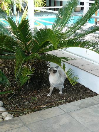 Belvedere Boutique Hotel: le chat de la maison 