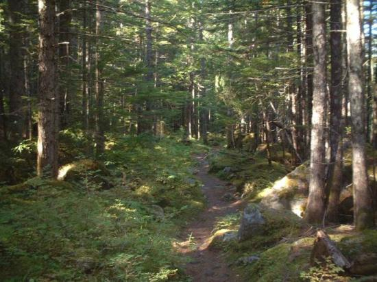 Nakusp Hot Springs: trail to hot springs source