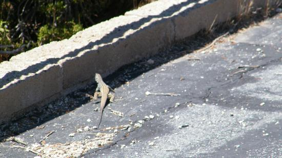 Santa Rosa Mountains / San Jacinto National Monument: another animal friend