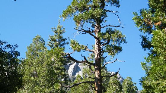 Santa Rosa & San Jacinto Mountains National Monument Visitor Center: Pines to Palms Highway