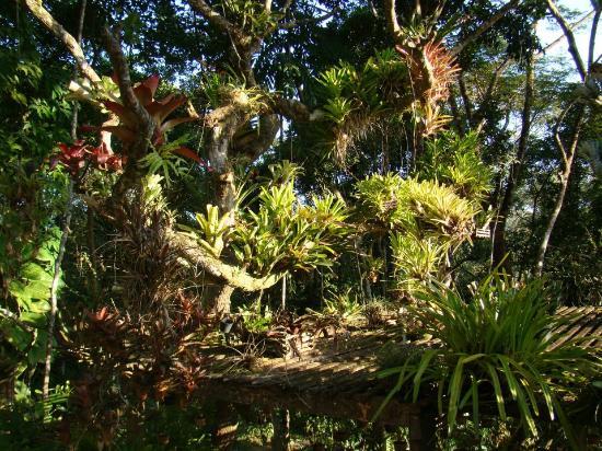 Casa Natureza Brasil: Jardim integrado com a Mata Atlântica original!