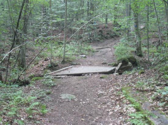 Healdville Trail: bridge before the first steep pitch