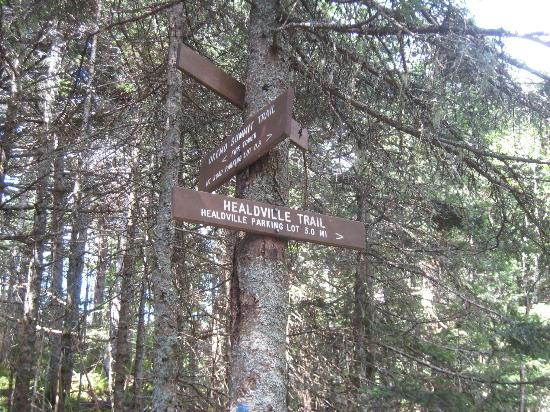Healdville Trail: Fire Tower trail junction