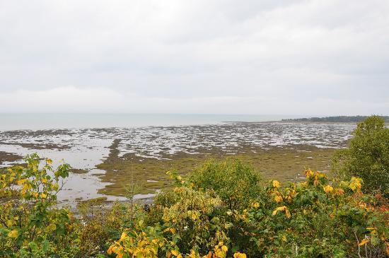 Auberge de L'Anse : Vue sur la baie, à marée basse