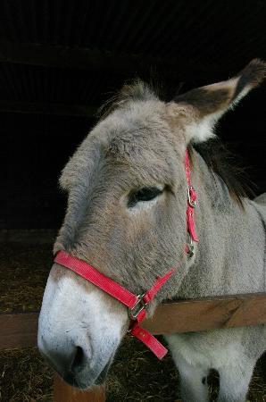 Hillside Animal Sanctuary: one of the beautiful donkeys at Hillside, West Runton