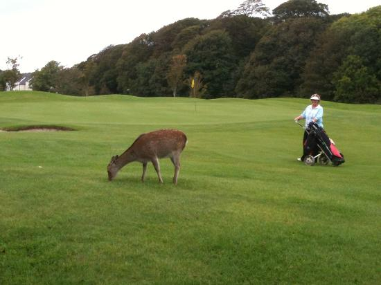 Waterford Castle Golf Club : Unobtrusive on course, even near this green!