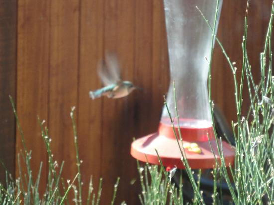 The Happy Cooker: Hummingbird feeder outside our window table