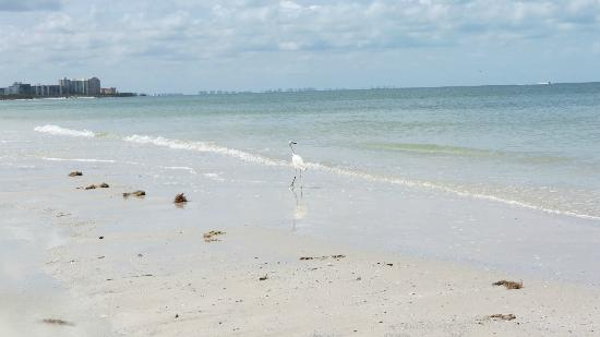 Fort Myers Beach: Naples toward the south