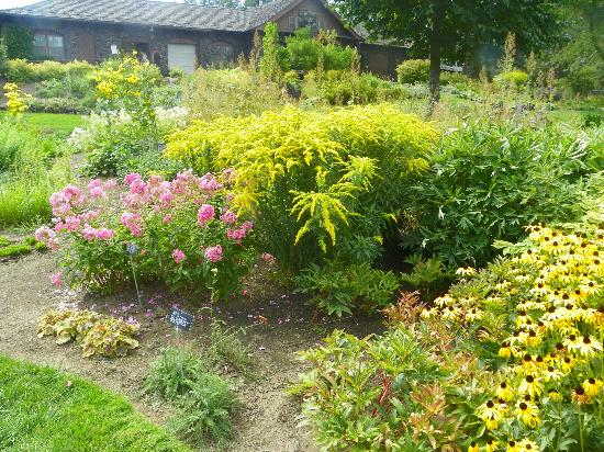 Парк Манито: Perennial Garden - Goldenrod in bloom